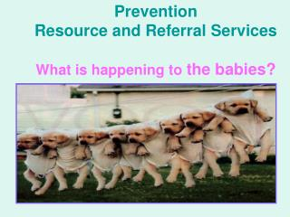 Prevention Resource and Referral Services What is happening to  the babies?