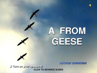 A  FROM GEESE