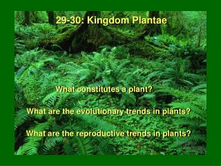 What constitutes a plant?