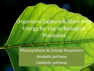 Organisms Capture & Store Free Energy for Use in Biological Processes