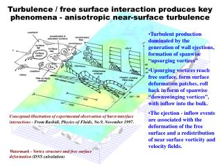 Turbulence / free surface interaction produces key phenomena - anisotropic near-surface turbulence