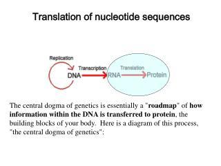 Translation of nucleotide sequences