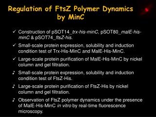 Regulation of FtsZ Polymer Dynamics by MinC
