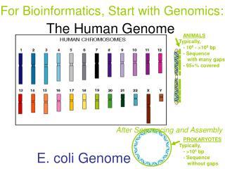 E. coli Genome