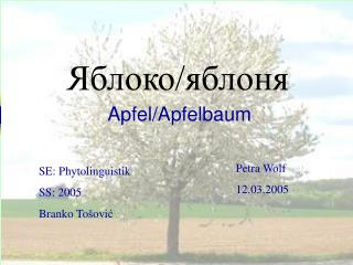 Яблоко/яблоня