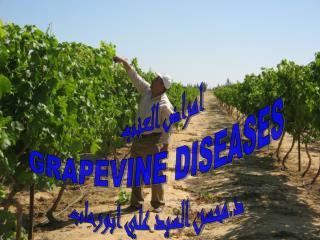 أمراض العنب GRAPEVINE  DISEASES