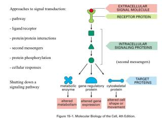 Approaches to signal transduction: - pathway - ligand/receptor - protein/protein interactions