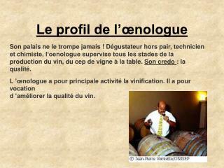 Le profil de l'œnologue