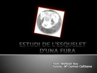 ESTUDI DE L�ESQUELET  D�UNA FURA