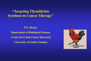 """Targeting Thymidylate Synthase in Cancer Therapy""  F.G. Berger Department of Biological Sciences"