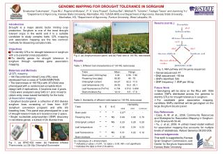 GENOMIC MAPPING FOR DROUGHT TOLERANCE IN SORGHUM