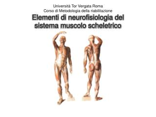 Il sistema muscolo-scheletrico