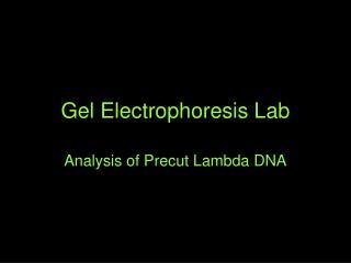 Gel Electrophoresis Lab