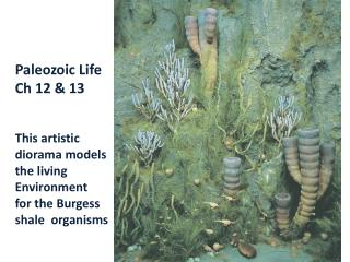 Paleozoic Life Ch 12 & 13 This artistic  diorama models the living  Environment for the Burgess