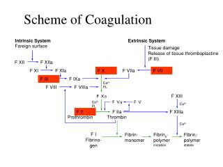 Scheme of Coagulation