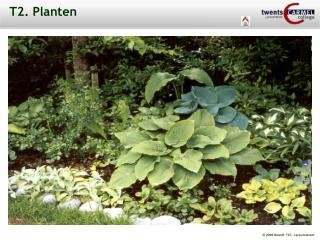 T2. Planten