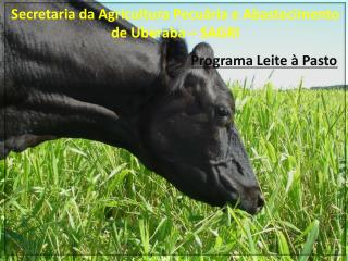 Secretaria da Agricultura Pecuária e Abastecimento de Uberaba – SAGRI Programa Leite à Pasto