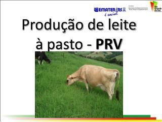 Produção de leite à  pasto -  PRV