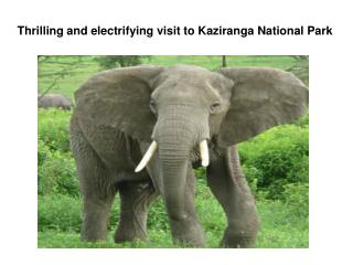 Thrilling and electrifying visit to Kaziranga National Park
