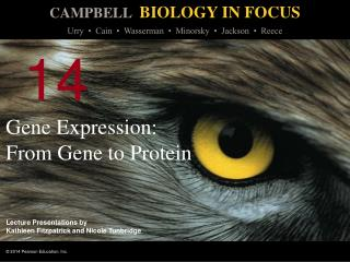 Gene Expression: From Gene to Protein