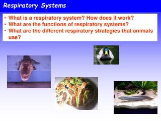 Respiratory Systems