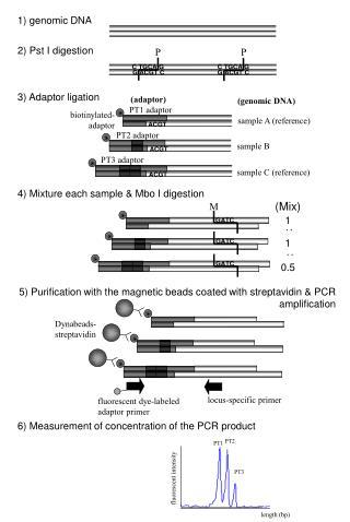 1) genomic DNA