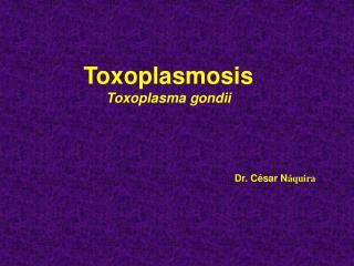 Toxoplasmosis Toxoplasma gondii