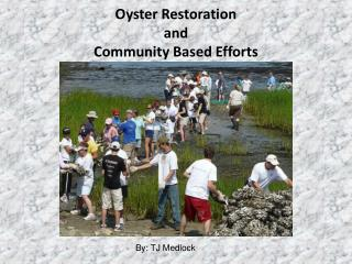 Oyster Restoration and Community Based Efforts