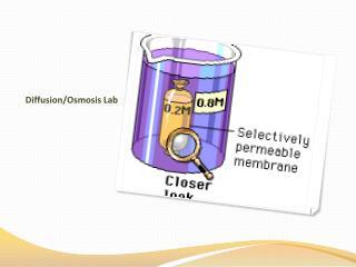 Diffusion/Osmosis Lab