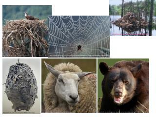 cvps/osprey/images/nest.jpg