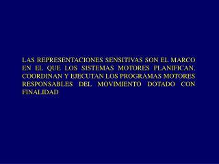 LAS REPRESENTACIONES SENSITIVAS SON EL MARCO EN EL QUE LOS SISTEMAS MOTORES PLANIFICAN, COORDINAN Y EJECUTAN LOS PROGRAM