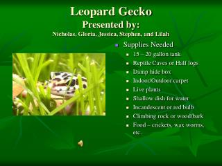 Leopard Gecko Presented by: Nicholas, Gloria, Jessica, Stephen, and Lilah