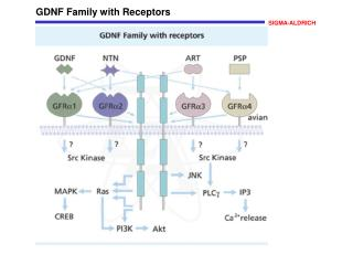 GDNF Family with Receptors