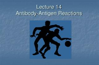 Lecture 14 Antibody-Antigen Reactions