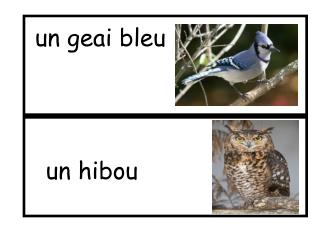 un geai bleu
