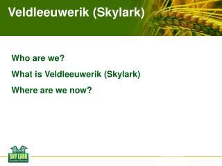 Veldleeuwerik (Skylark)