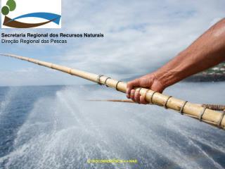 Secretaria Regional dos Recursos Naturais Direção  Regional das Pescas