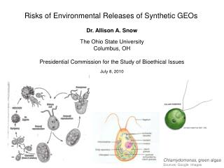 Risks of Environmental Releases of Synthetic GEOs