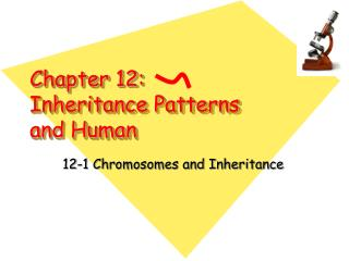 Chapter 12:  Inheritance Patterns and Human