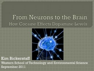 From Neurons to the Brain How Cocaine Effects Dopamine Levels