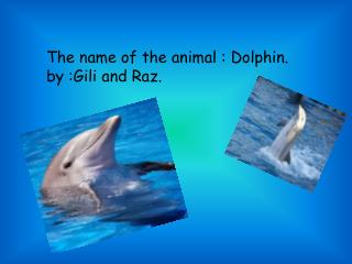 The name of the animal  :  Dolphin.  by  : G ili and  R az .