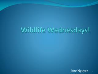 Wildlife Wednesdays!