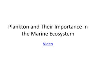 Plankton and Their Importance in the Marine Ecosystem