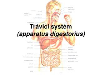 Tr�vic� syst�m  (apparatus digestorius)