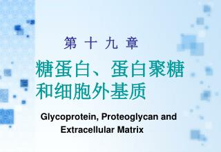 糖蛋白、蛋白聚糖 和细胞外基质 Glycoprotein , P roteoglycan and            Extracellular Matrix