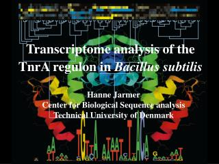 Transcriptome analysis of the TnrA regulon in  Bacillus subtilis
