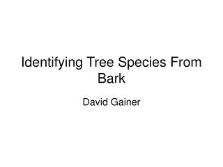 Identifying Tree Species From Bark