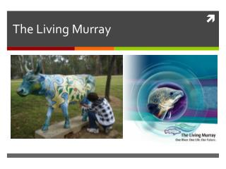 The Living Murray