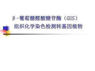 β- 葡萄糖醛酸糖苷酶( GUS) 组织化学染色检测转基因植物