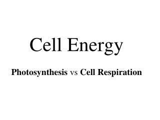 Cell Energy Photosynthesis  vs  Cell Respiration